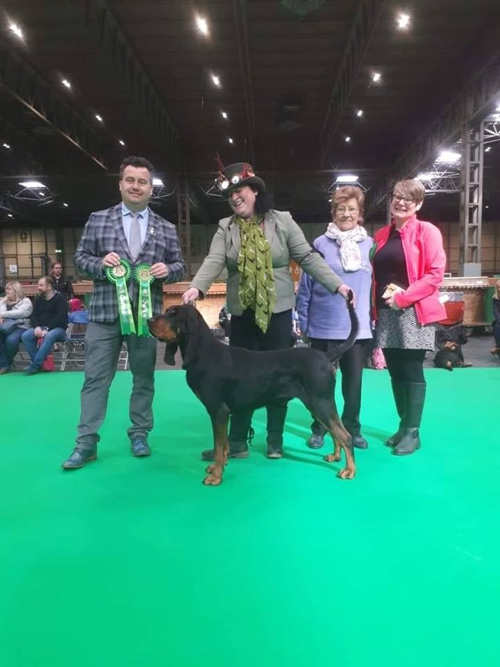 Black & Tan Coonhound Takes The AV Import Register At First Crufts For The Breed