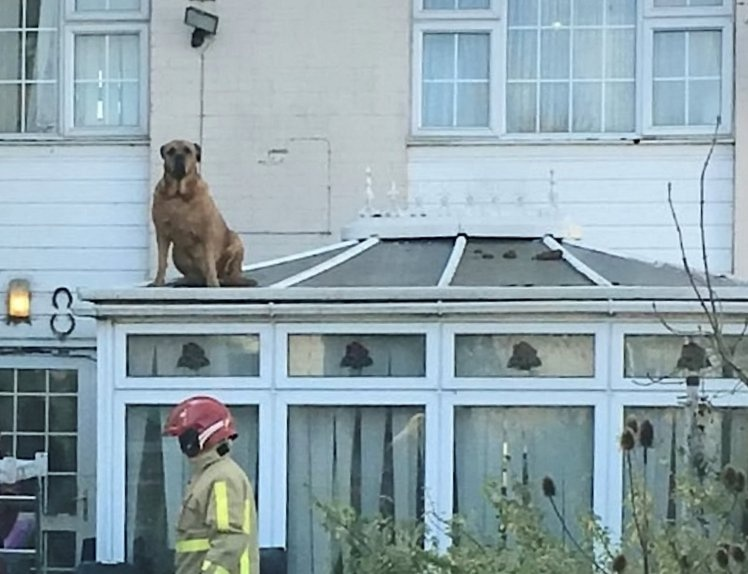 Cat On A Hot Tin Roof? No,  Dog On A Cold Glass One!