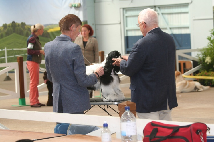 Champion Classes Get The Go Ahead To Be Introduced At Breed Champ Shows