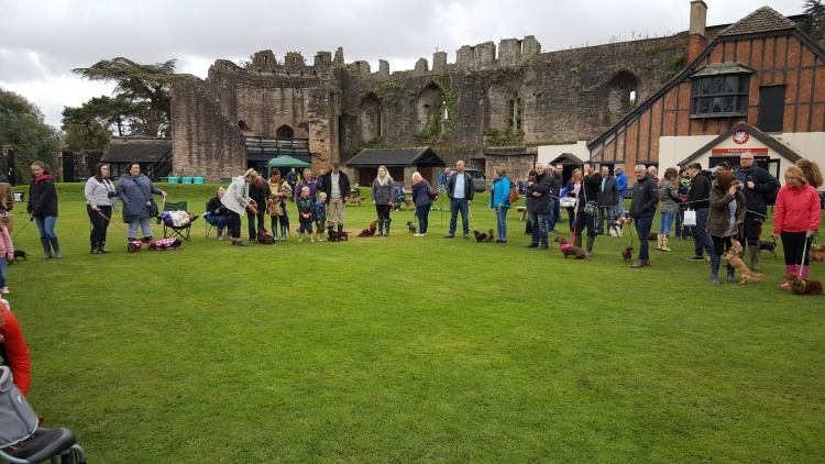 Dachshund IVDD Fundraising At Caldicot Castle