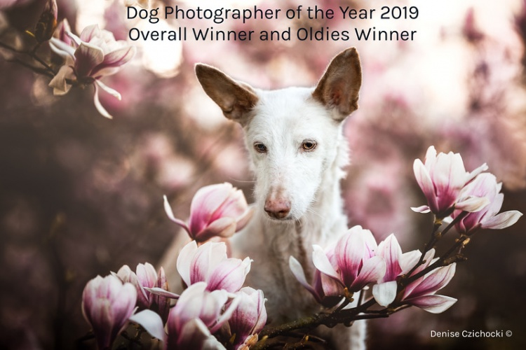 Dog Photographer Of The Year Announced
