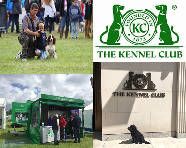 Kennel Club Insight For August