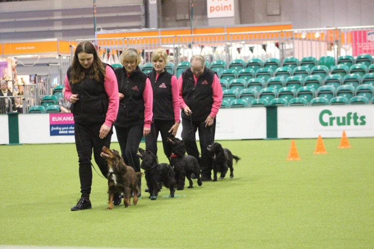 Kennel Club Insight-May
