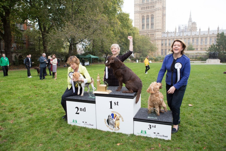 Kennel Club Insight-November