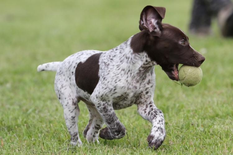 Kennel Club Insight-September