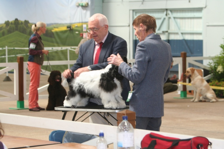 Kennel Club Invite Q&A On Judges Competency Framework