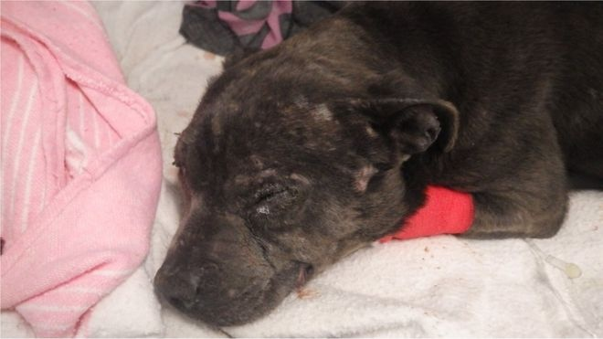 Missing Dog Found After Four Years With Horrendous Injuries