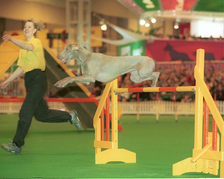 OPPORTUNITY FOR AGILITY CLUBS TO HOST OLYMPIA & DISCOVER DOG QUALIFIERS IN 2018