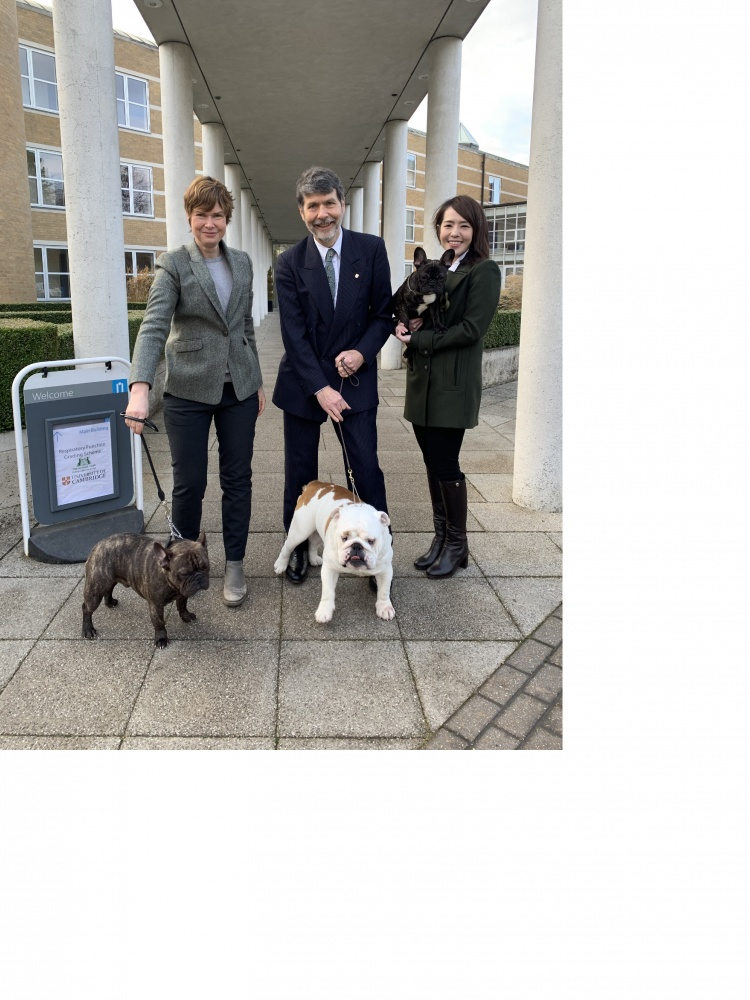 The Kennel Club And University Of Cambridge Launch Vital Scheme To Improve Health Of Pugs, French Bulldogs And Bulldogs