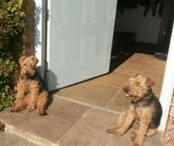 Three Weeks Missing, Then Dogs Turn Up On The Doorstep!
