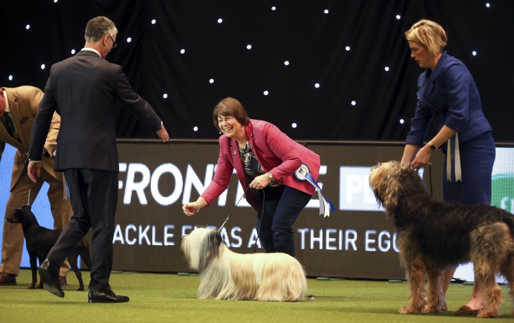 VULNERABLE BRITISH AND IRISH BREEDS COMPETITION RETURNS WITH NEW FORMAT